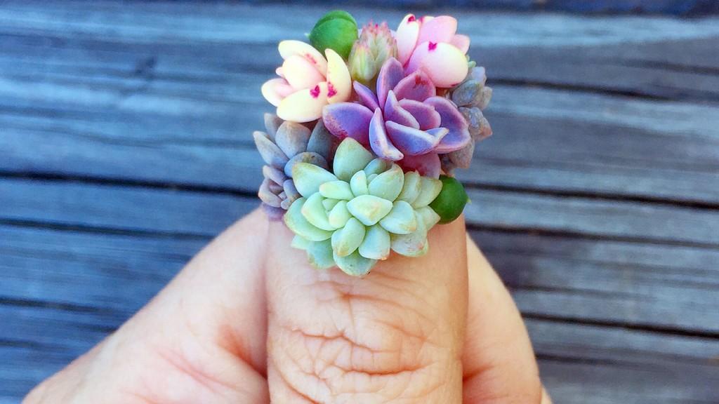 Succulent nails